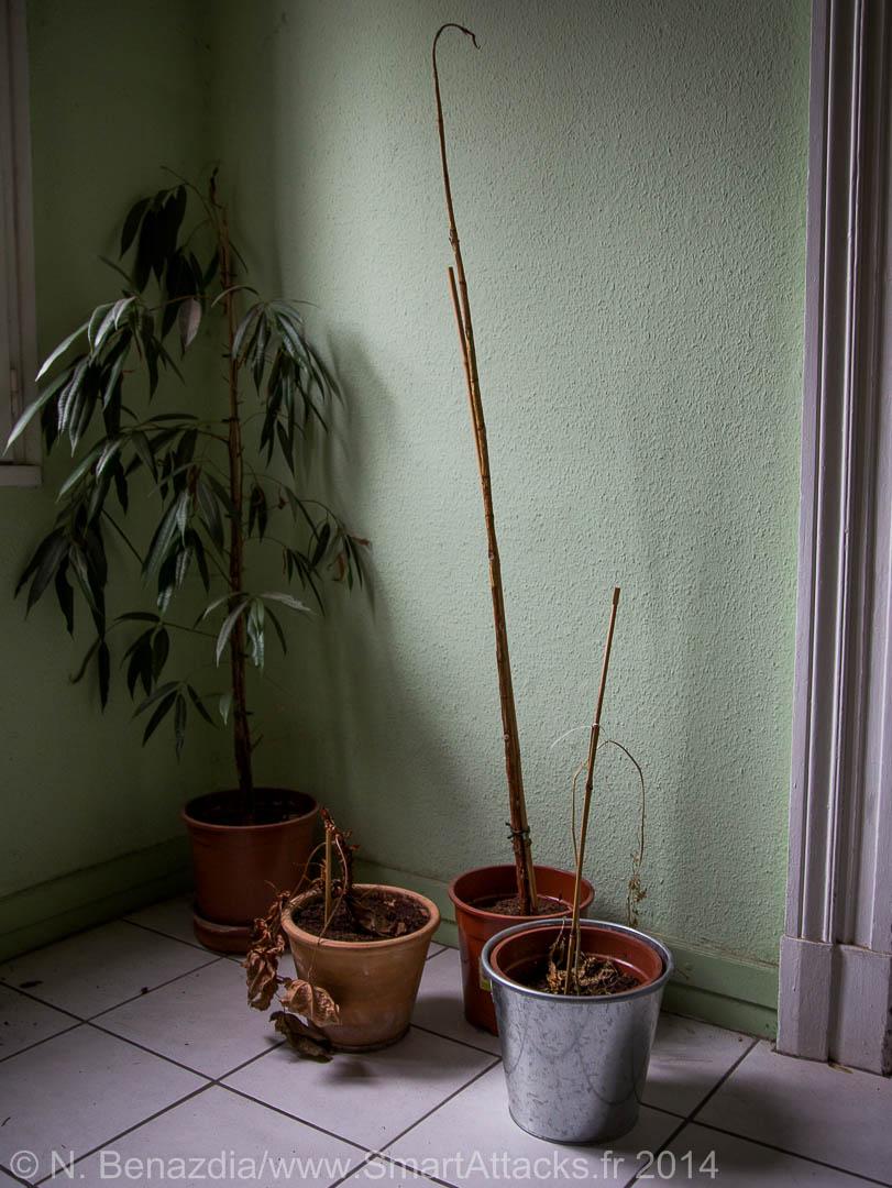 Les 3 pots à droite contenaient jadis de belles plantes... mais ça c'était avant d'avoir le Flower Power