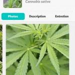 Pour ceux qui se demandent, le Flower Power peut servir pour la culture du cannabis.
