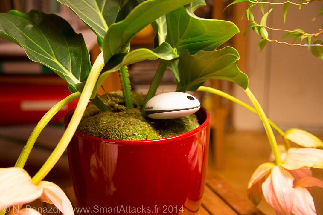 test koubachi plant sensor-10