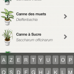 cannabis plante surveiller